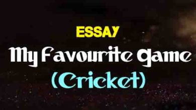 essay on cricket match for 10th class